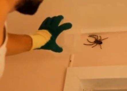 Il se retrouve nez à nez avec une très grosse araignée