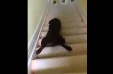Descendre les escaliers en marchant, c'est pour les nuls !