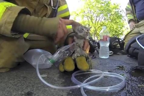 Il sauve un chaton asphyxié par de la fumée