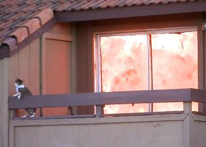 Un chat en proie aux flammes saute pour éviter de finir brûlé