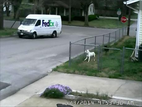 Un livreur de chez FedEx légèrement distrait