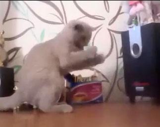 Un chat essaye d'attraper l'air qui sort d'une enceinte