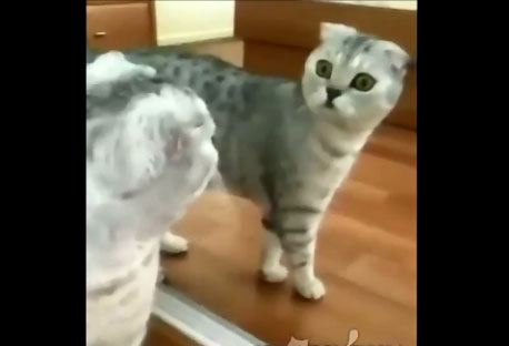 Un chat se fait surprendre par son propre reflet