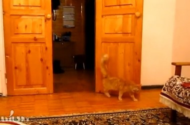 Un chat qui a peur lorsque Super Mario saute