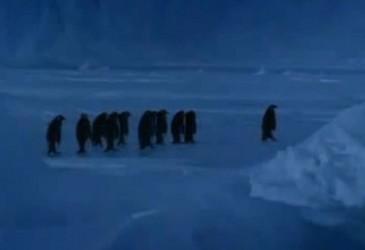 Hilarant fail lorsqu'un pingouin glisse sur la banquise