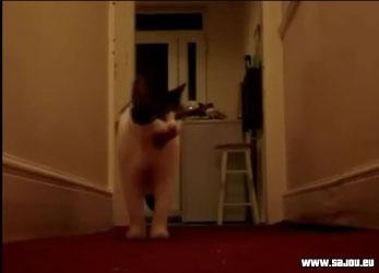 Nabilla – allo pas de shampoing, le chat lui répond
