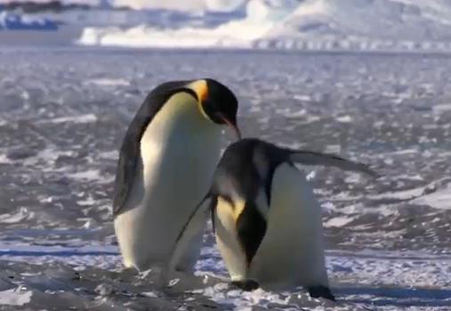 Compilation de fail de pingouins