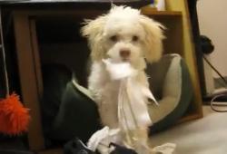 Ce chien ne veut pas de témoin gênant après sa bêtise