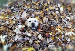 Un chien visiblement très heureux dans sa vie