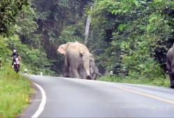 Un troupeau d'éléphants attaque un scooter qui passait par là