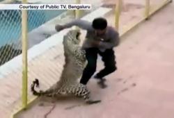Un léopard rentre dans une école en Inde et attaque 5 personnes