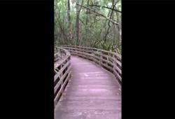 Une promeneuse va avoir la peur de sa vie sur un chemin