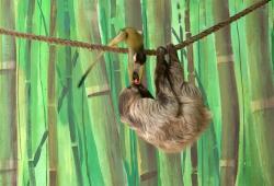 Un singe vole le fruit que mangeait un paresseux